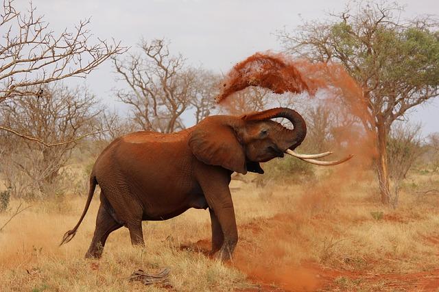 binance Uganda elephant