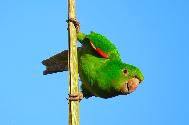 green bitcoin cash bird