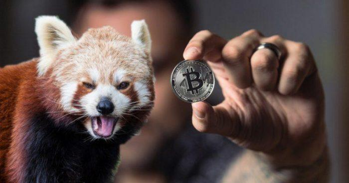 Blockchain startups forced to lay off staff to survive the bear market