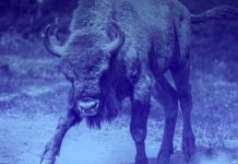 Great sign for the ecosystem: Crypto devs are as bullish as ever