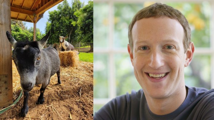 Is Mark Zuckerberg Getting Into Bitcoin? This Will Suprise You.